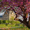 Spring In The Garden by Brian Jannsen