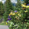 Spring In The Mountains - Colorado by Gregory Ballos