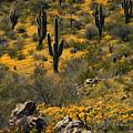 Spring In The Sonoran Desert  by Saija Lehtonen
