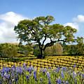Spring In The Vineyard by Kurt Van Wagner