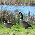 Spring In The Wetlands by Maria Urso