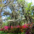 Spring Is All Over by Susanne Van Hulst