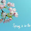 Spring Is In The Air by Cloudy Theater