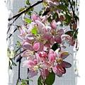 Spring Is Melting Away by Carol Groenen