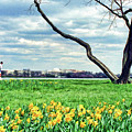 Spring Jog On The Potomac by Allen Beatty