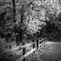 Spring Leaves B/w by Marvin Spates