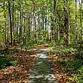 Spring Light And Shadow by Debbie Oppermann