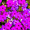 Spring Love Spca by David Lee Thompson