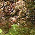 Spring Maple Leaves Over Japanese Garden Pond by Carol Groenen