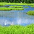 Spring Marsh Grasses by Sybil Staples