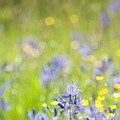 Spring Meadow 3 by Jill Greenaway