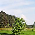 Spring Meadow by Vadzim Kandratsenkau