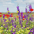 Spring Meadow With Flowers Nature Scene by Goce Risteski