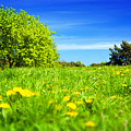 Spring Meadow With Green Grass by Michal Bednarek