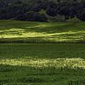 Spring Meadows Of Wildflowers by Garry Gay