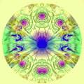 Spring Meditation by Ellen Berrahmoun