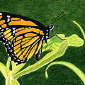 Spring Monarch by Wade Clark