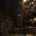 Spring Night by Crooked Cat Art and Photography