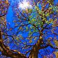 Spring Oak by Michael Tidwell