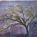 Spring Oak by Patricia Stalter