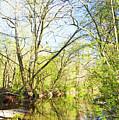 Spring On A Pennsylvania Stream, Fairmount Park, Philadelphia by A Gurmankin