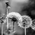 Spring Over... by Peteris Vaivars