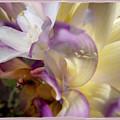 Spring Overture by Chuck Brittenham