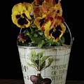 Spring Pansy Flowers In A Pail by Edward Fielding