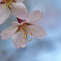Spring Pastels by Debbie Oppermann