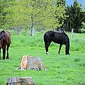 Spring Pastures by Bonfire Photography