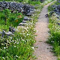 Spring Path/loving by Karmen Skaro