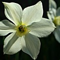 Spring Perennial by Barbara S Nickerson