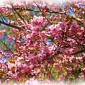 Spring Pink Blossoms by Smilin Eyes  Treasures