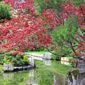 Spring Pond Reflection by Carol Groenen