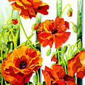 Spring Poppies by Janis Grau