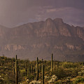 Spring Rain In The Sonoran  by Saija Lehtonen