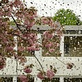 Spring Rain Outside The Window And Sakura by Marina Usmanskaya