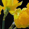 Spring by Robert Bissett