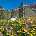 Spring Rocky Mountain Landscape by Cascade Colors