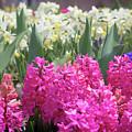 Spring Round Up by Melissa Leda