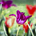 Spring Sensations  by Kerri Farley