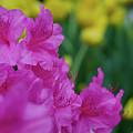 Spring Series #06 by John Diebolt