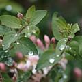 Spring Showers 5 by Antonio Romero