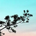 Spring Silhouette by Will Borden