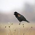 Spring Singer I I by Bonfire Photography