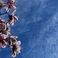 Spring Sky by Ludmila SHUMILOVA