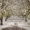 Spring Snow by Tara Schendel