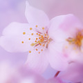 Spring Softness by LHJB Photography
