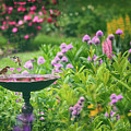 Spring Splendor by Jessica Jenney