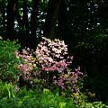 Spring Spotlight by Susan Herber